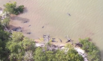 Over 80 Dolphins Found Dead off Florida Coast (Video)