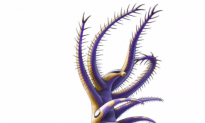 This Ancient Sea Creature With 30 Arms Had Bizarre Eating Behavior (Video)