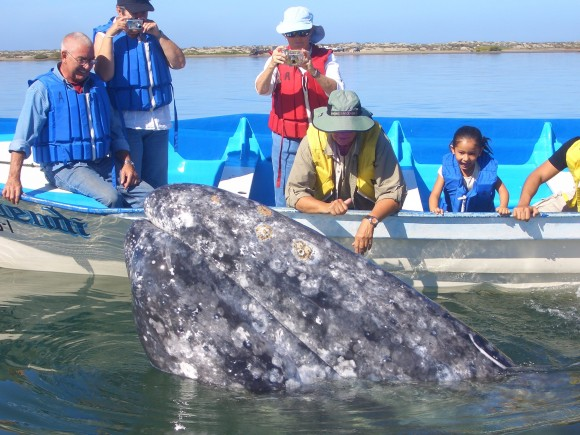 Whale watching on the Sea of Cortez. (Villa del Palmar Beach Resorts & Spa)