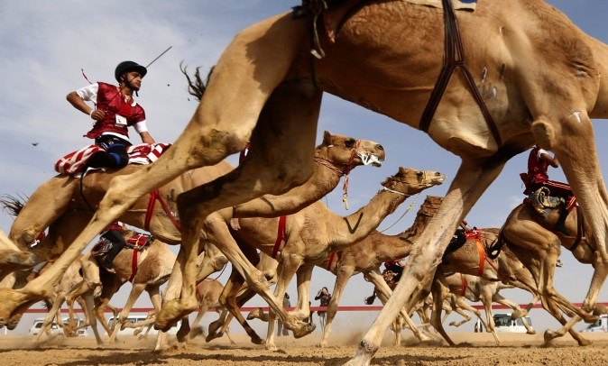 Jockeys take the start of a traditional camel race during the Sheikh Sultan Bin Zayed al-Nahyan Camel Festival, held at the Shweihan racecourse, in the outskirts of Abu Dhabi, on Feb. 10. (KARIM SAHIB/AFP/Getty Images)