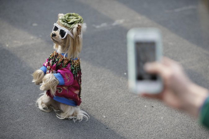 A dog sits on the street prior the Gucci show during the Women's Fall/Winter 2017/2018 fashion week in Milan on Feb. 22, 2017. (Marco Bertorello/AFP/Getty Images)