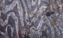 Scientists Dig Up Earth's Oldest Fossil (Video)