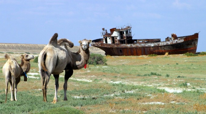 "A picture taken 04 August shows camels passing by a rusty shipwrecks at the place called ""Sheeps cemetery"" in Dzhambul settlement, some 64 kms from town of Aralsk. The ecological disaster on Aral Sea, which had been drying up for the past 40 years, was reached in 1987, when salted lake, which had once been the world's fourth largest, split into two unequal parts. (Photo credit should read VYACHESLAV OSELEDKO/AFP/Getty Images)"
