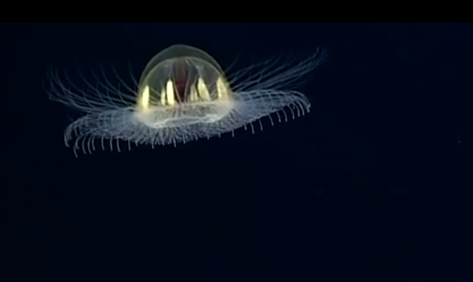 5 Weird Marine Life Forms Spotted by NOAA's Deep Ocean Mission (Video)