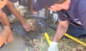 Sacramento Fire Crews Free Dog From Metal Fence
