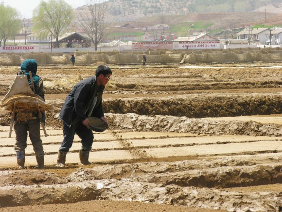 Co-operative farm workers prepare fields for rice transplanting near Sariwon city, North Hwanghae province, North Korea on 20 April 2005 in this handout from the United Nations. (Gerald Bourke/WFP via Getty Images)