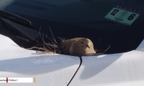Police Cruiser Taken off Streets After Bird Sets Up Nest on Vehicle (Video)