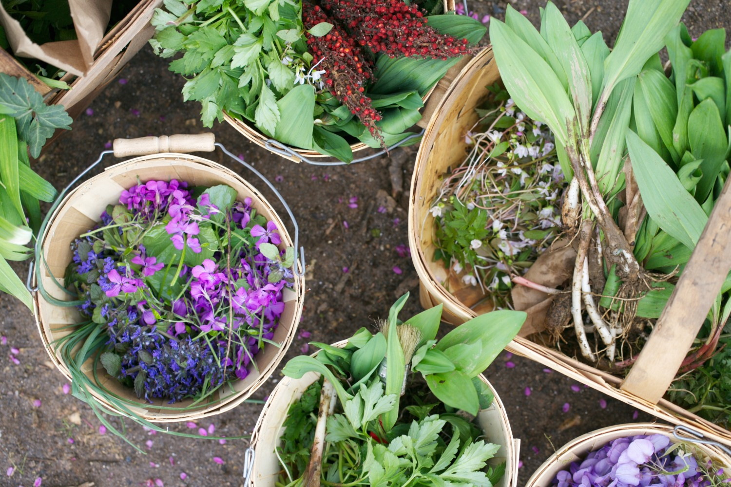 Baskets full of foraged plants. (Courtesy of Salad for President)