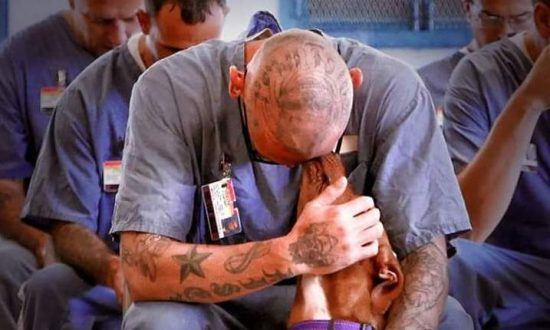 Dog Training Changes Prison Inmates' Lives
