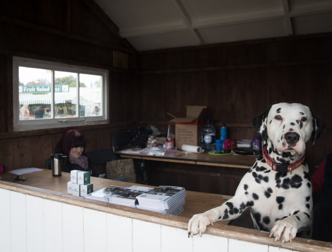 A dog looks out of a booth selling programs at the Mitsubishi Motors Badminton Horse Trials, held on the Duke of Beaufort's estate, in Badminton, England, on May 4, 2017. (Matt Cardy/Getty Images)