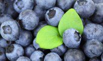 6 Best Cell Regeneration Foods