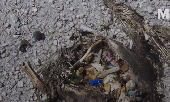 A 17-Year-Old Might Have Figured Out a Solution to the Ocean Trash Problem (Video)