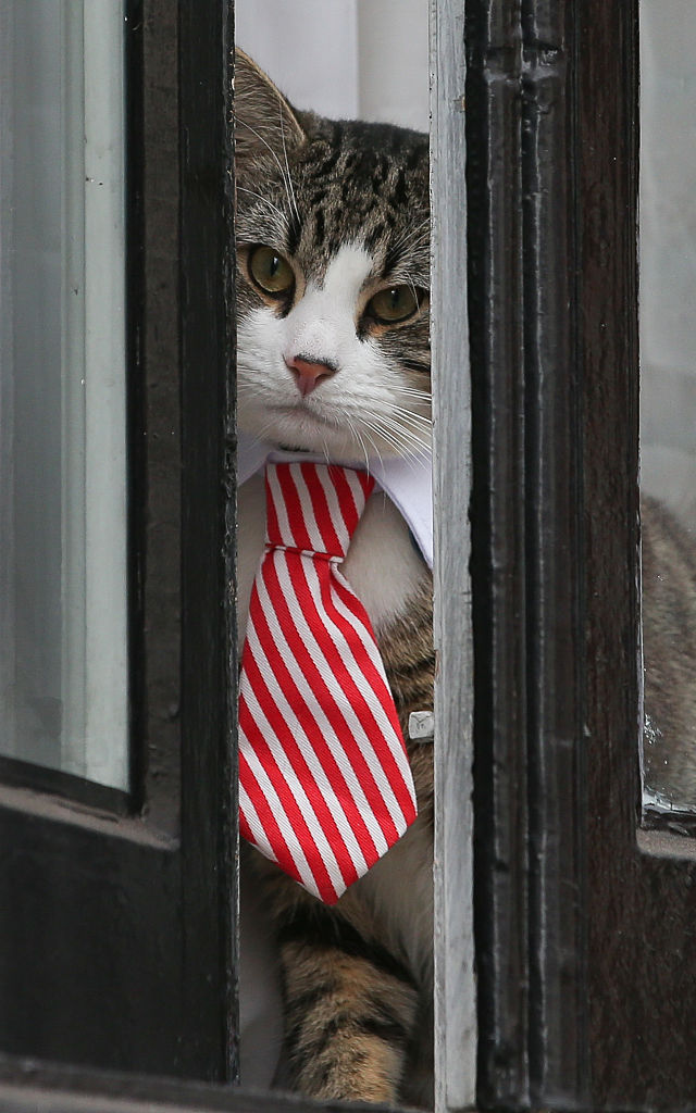 A cat named 'James' wearing a collar and tie looks out of the window of the Ecuadorian Embassy in London on Nov. 14, 2016. (DANIEL LEAL-OLIVAS/AFP/Getty Images)