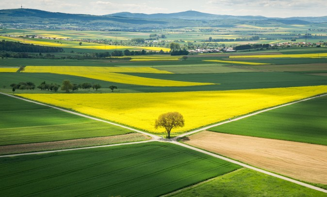 Sun shines on a rapeseed field in Münzenberg, Germany, on May 21, 2017. (FRANK RUMPENHORST/AFP/Getty Images)