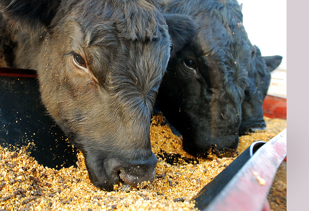 Antibiotics Are Not the Only Drugs Used in U.S. Meat