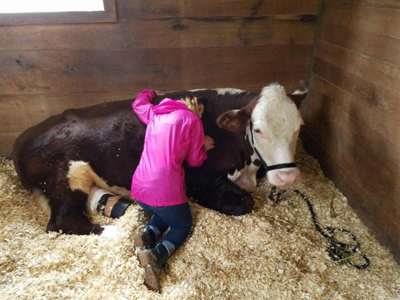 As a calf on a cattle ranch in Tennessee, Dudley got bailing twine wrapped around his foot, which constricted the blood flow and caused his foot to fall off. Dudley received a prosthetic foot and now gives love to kids in need of it. (Courtesy of The Gentle Barn)