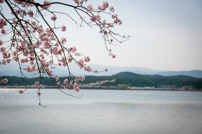 The Gyeongpoho Lake during the Gyeongpo Cherry Blossom Festival in Gangneung.  (Benjamin Chasteen/The Epoch Times)