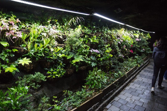 The Botanical Garden in the Gwangmyeong Cave. (Benjamin Chasteen/The Epoch Times)