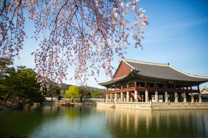 Cherry blossoms bloom near the pavilion in the Gyeongbokgung Palace. (Benjamin Chasteen/The Epoch Times)