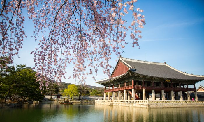 Cherry blossoms near the pavilion at the Gyeongbokgung Palace. (Benjamin Chasteen/The Epoch Times)