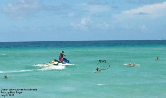 The bull shark responsible for the attack caught in photo swimming among beachgoers. (Rob Boyte/Miami-Dade Fire Rescue)