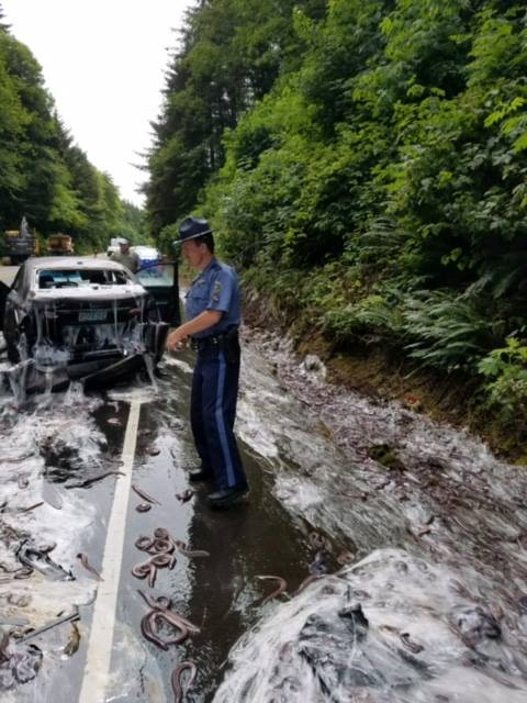 State trooper on scene of a truck carrying hagfish overturning on Oregon highway 101 on July 13, 2017. (Oregon State Police)