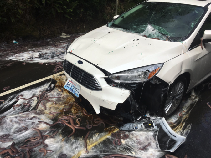 Car surrounded by slime and hagfish after truck carrying hagfish overturned on Oregon highway 101 on July 13, 2017. (Depoe Bay Fire District)