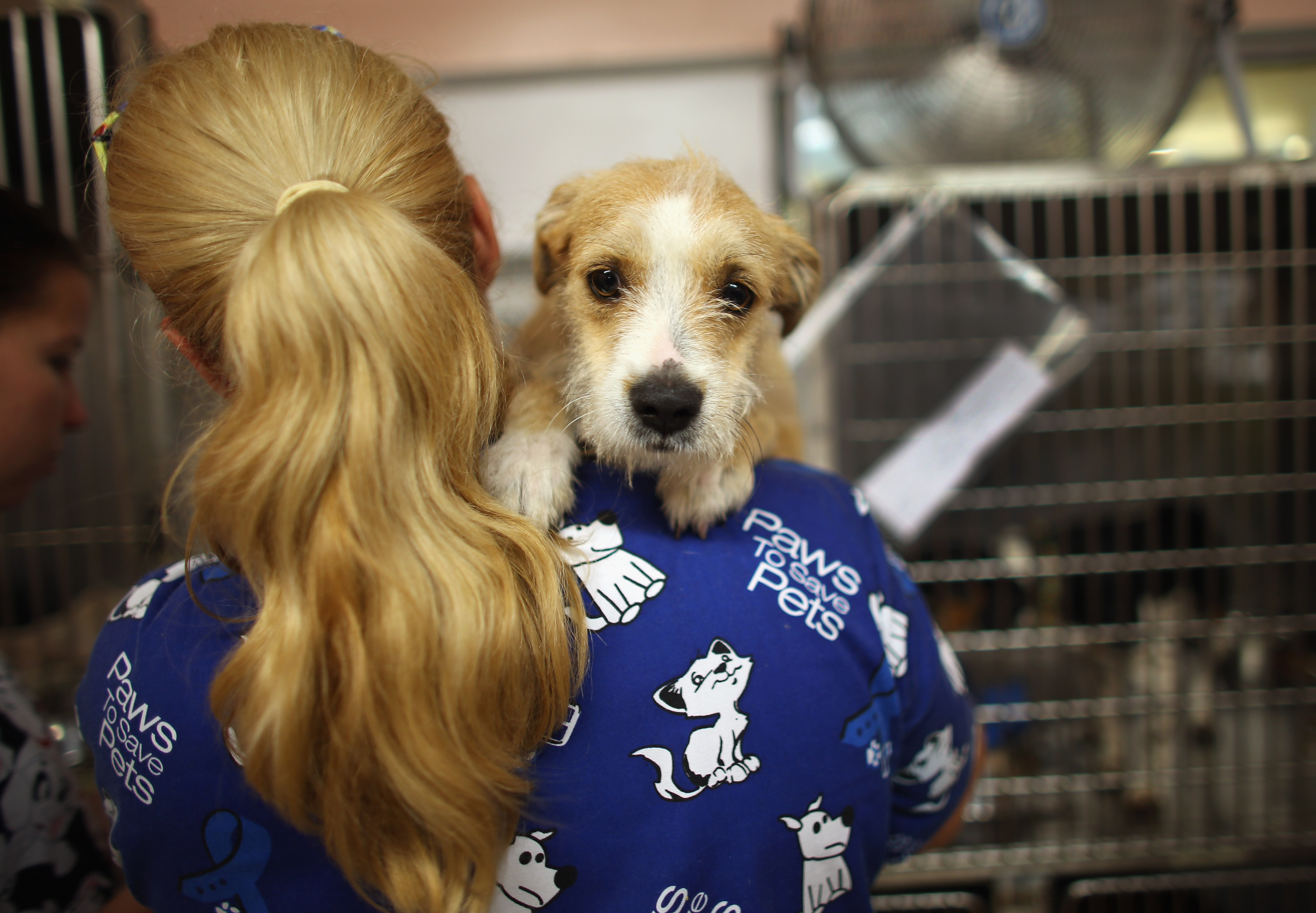 A veterinarian volunteer cares for a rescued dog  (Photo by Joe Raedle/Getty Images)