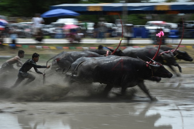 A farmer rides on the back of a wooden plough tied to a pair of racing buffaloes during the annual rice planting festival in Chonburi, Thailand, on July 16, 2017. Thailand's buffaloes don't usually strike people as the quickest of beasts, but farmers showed off their fastest bovines in a unique, muddy speed test. (LILLIAN SUWANRUMPHA/AFP/Getty Images)