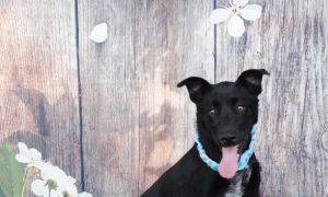 Facebook Stars up for Adoption at Montgomery County Animal Shelter