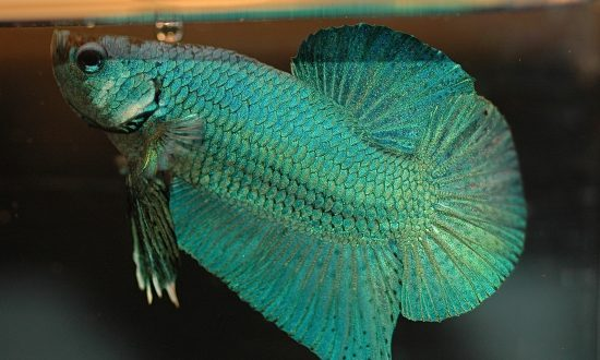 Man to Spend 120 Days Behind Bars After Altercation During Which Pet Fish Was Killed