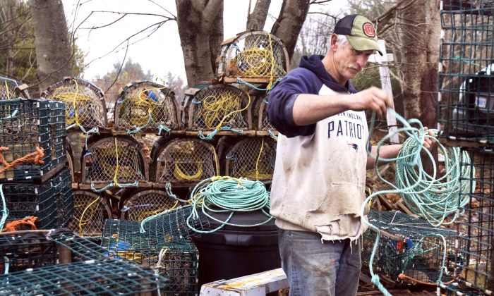 Peter Marshall attaches lines to his lobster traps in Hacketts Cove, N.S., in this file photo. Some fishermen in the Bay of Fundy will alter the way they lay their lines on the ocean floor this season in order to protect North Atlantic right whales from entanglement. (The Canadian Press/Andrew Vaughan)
