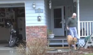 Man Puts in Great Effort to Walk His Paraplegic Dog
