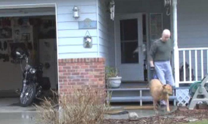 Man Puts in Great Effort to Walk His Paraplegic Dog
