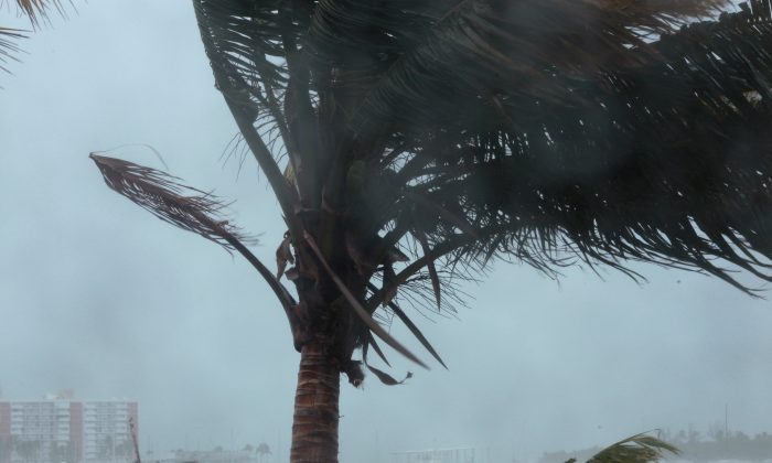 A palm tree buckles under winds and rain as Hurricane Irma slammed across islands in the northern Caribbean on Wednesday, in Fajardo, Puerto Rico September 6, 2017.  REUTERS/Alvin Baez