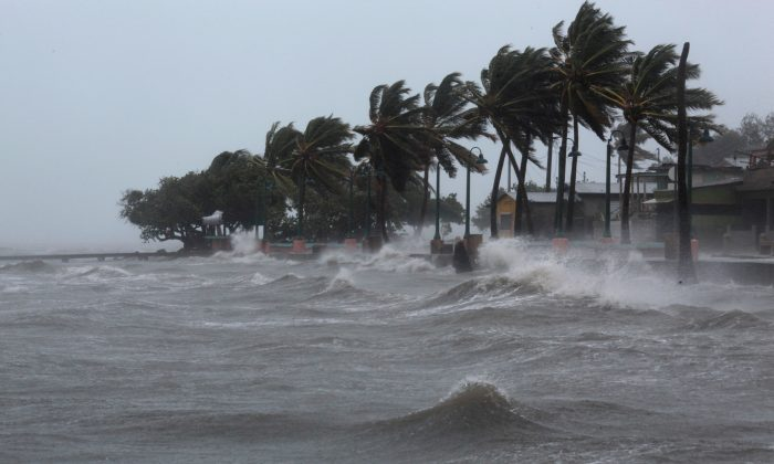 Palm trees buckle under winds and rain as Hurricane Irma slammed across islands in the northern Caribbean on Wednesday, in Fajardo, Puerto Rico September 6, 2017.  REUTERS/Alvin Baez
