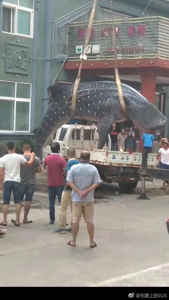 Fishermen lift a whale shark from a flatbed truck in the middle of a street in Fujian's Xiapu county in China on September 4, 2017. (Social Media)