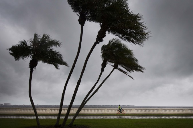 TreeCyclist A man rides his bike on Bayshore Boulevard as palm trees begin to feel the wind in Tampa, Florida, on September 10, 2017, where Tampa residents are fleeing the evacuation zones ahead of Hurricane Irma's landfall. Hurricane Irma regained strength to a Category 4 storm early Sunday as it began pummeling Florida and threatening landfall within hours. (Jim Watson/AFP/Getty Images)