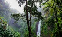 Millionaire Dies in Rain Forest Restaurant Rappelling Accident
