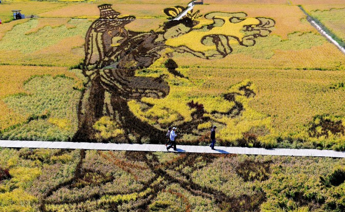 An image of Chinese a heavenly maiden was created using different varieties of rice in a rice paddy field during the harvest season in Shenyang, China's northeast Liaoning Province on Sept. 20. (STR/AFP/Getty Images)