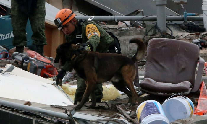 A Mexican soldier and his dog search for survivors in the rubble of a collapsed building after an earthquake in Mexico City, Mexico on Sept. 23, 2017. (REUTERS/Henry Romero)