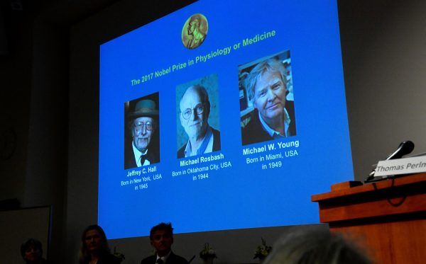 The names of Jeffrey C. Hall, Michael Rosbash and Michael W. Young are displayed during a news conference to announce the winner of the Nobel Prize in Physiology or Medicine 2017, in Stockholm, Sweden October 2, 2017. (TT News Agency/Jonas Ekstromer via REUTERS)