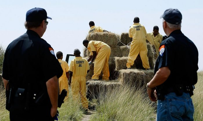 Inmates from the Jefferson County Jail unload bails of hay for cattle, as pastures are still filled with floodwater from the storm surge of Hurricane Ike Sept. 17, 2008, in Jefferson County Texas, Texas. Texas inmates donated over $50,000 to the American Red Cross over the month of September to help with Hurricane Harvey recovery efforts. (Mark Wilson/Getty Images)