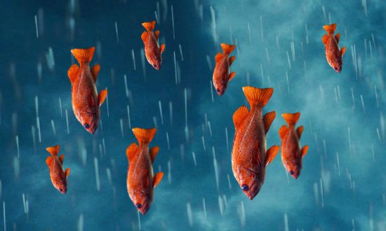 Raining Cats and Dogs? No, Just Fish