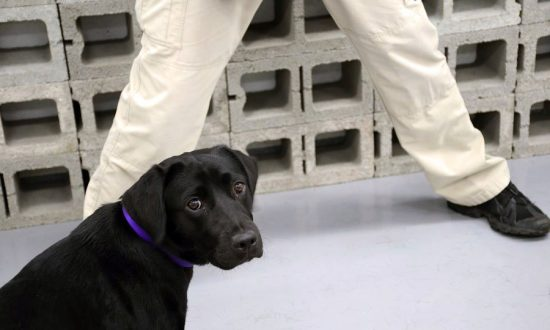 Dog Fired From the CIA After It Loses Interest in Detecting Explosives