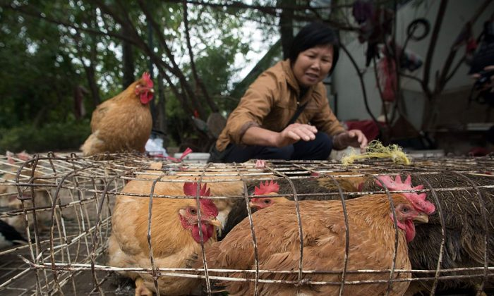 This picture taken on January 14, 2016 shows live chickens being sold at a market in Guangzhou, southern China's Guangdong province. (JOHANNES EISELE/AFP/Getty Images)