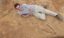 Fossil Footprints Reveal Existence of Big Early Dinosaur Predator