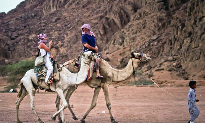 Tourists ride camels in Egypt's Red Sea resort. Laura Plummer was heading for a break at a Red Sea resort before she was detained. (STR/AFP/Getty Images)