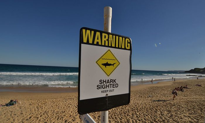 A shark warning sign is seen posted on the beach in the northern New South Wales city of Newcastle on Jan. 17, 2015. (Peter Parks/AFP/Getty Images)