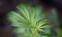 Elderly Couple Wrongfully Arrested When Their Hibiscus Plants Were Mistaken for Marijuana